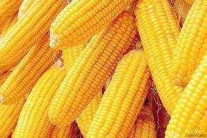 玉米:坚持去库存