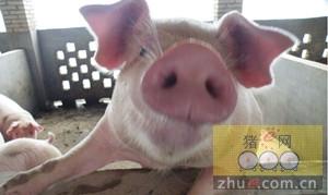 台湾省内猪价目前比较稳定,稳定在225-275美元/100k