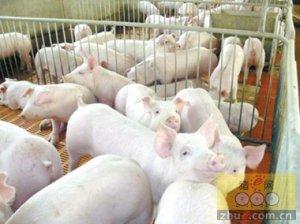 500万生猪养殖项目落户曲靖温氏云南布局