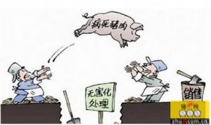 市民发现病死猪肉,举报查实最高可获50万