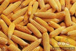 吉林、辽宁两省玉米市场调查:坚持去库存,发力供给侧