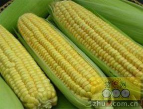 吉林、辽宁两省玉米市场调查:利好消息迭出,库存形势不容乐观!