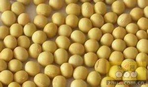 拉尼娜的预期强烈 豆粕中长线滚动做多为宜