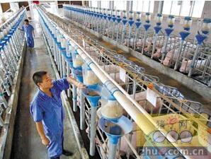 浙江龙游:让客户用手机养猪
