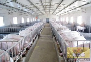 规模化猪场常见应激问题及其应对方法