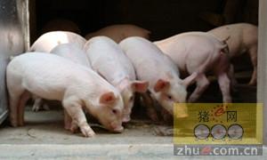 猪腹泻的防控:控制猪