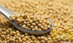 市场预期美豆种植面积上调 6月报告利空有
