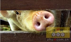 猪场惊现内贼!员工偷猪仔偷饲料42万余元