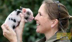 三种生猪常见内科病的