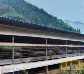 猪场环保解决之道:非接触发酵床养猪零排放模式