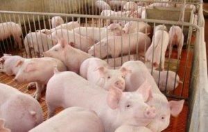 猪价回落,温氏股份6月商品猪销售均价为1