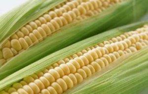 收购玉米获刑 何罪之有?