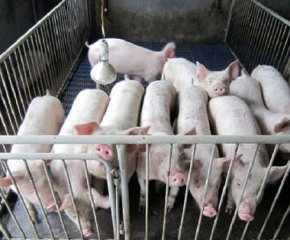 百万头生猪生态养殖项目落地山西寿阳