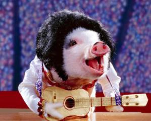 猪场防治猪病以预防为主的原因