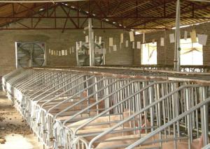 高温时节猪场控制需注意哪些?