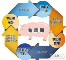 除饲料和养猪外 兽药、疫苗等动保板块利润水平也可喜
