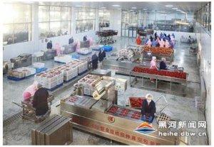 黑龙江:北安生猪养殖深加工项目投入运营