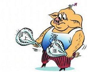 高温高湿天气或促使灾区疫情危险上升 加大后期猪价上涨力度