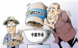 中国大豆进口或出现十五年来首度下滑