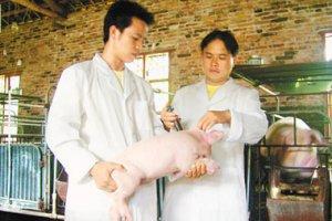 宁河原种猪场为百姓做实事 提高养殖效益