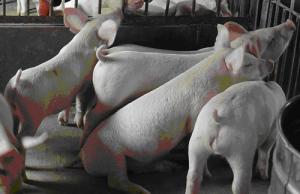 畜牧养殖补贴,你所了解的可能只是九牛一