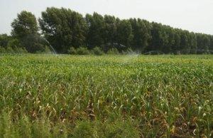玉米下行速度将在新粮上市前加速