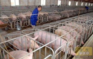 直面养殖用药环节 降低隐藏威胁