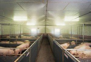 猪场清洁卫生及生物安全工作指南