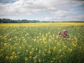 欧盟油菜籽总产量料为2067万吨