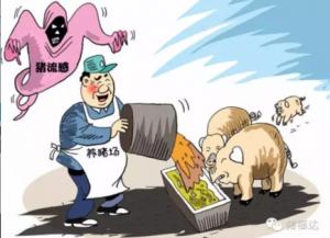 猪瘟为什么难控制?――五大原因及应对策略