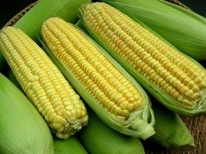 玉米种植面积调减要跟农民增收同步进行