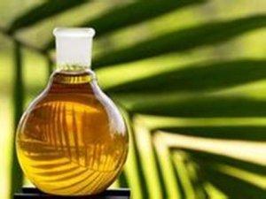棕榈油底部区间弱势震荡