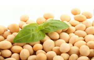 8月豆粕供求或改善 天气仍是最大变数