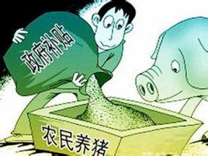 云南泸西能繁母猪饲养补贴通过一卡通接兑付