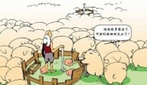 太谷市集成化种猪养殖 家庭农场稳步推进