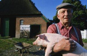 俄罗斯猪肉生产将要达到自给自足 价格下降或不可避免