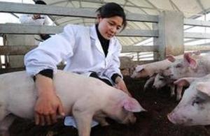 猪病防治的九大误区
