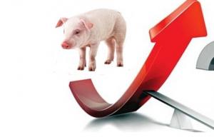 短期生猪价格依旧呈现强势上涨走势......