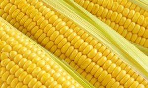 玉米即将掉入陷阱 价格越来越遭!太惨啦