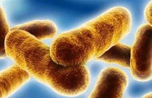 省畜牧兽医局普及雨季预防炭疽病常识