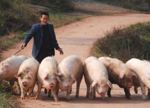 """业内总结分析后期猪价存在上涨空间""""毋庸置疑""""?!"""