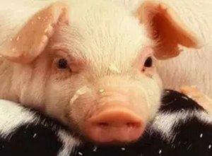 就用5招,半年存栏翻一番!手把手教你改造猪场