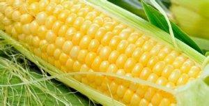 玉米价格又涨了,这回能持续多久?