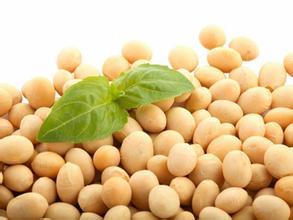 美豆不跌反涨 养殖业恢复缓慢豆粕需求减