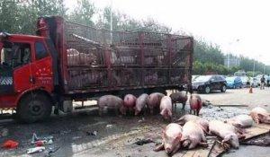 惨!拉猪车和拉砖车高速相撞,致大量生猪死亡……