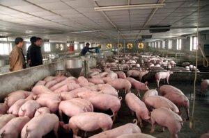 34句养猪学:总结的良