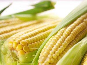 市场供大于求,玉米逆市涨价为哪般?