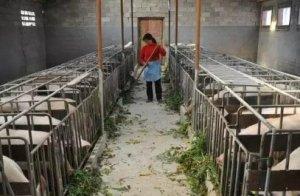 养猪只为挣点钱养家,却遭遇那么多不公......