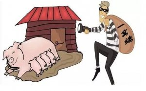 各地惊现偷猪贼,请养