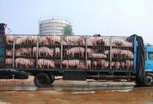 牧原百万头生猪养殖项目落户河北老河口再设6家子公司